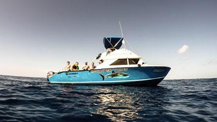 Whale Shark Tour Boats