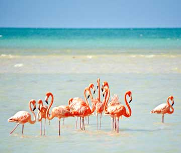 Stunning Natural Views of Holbox island