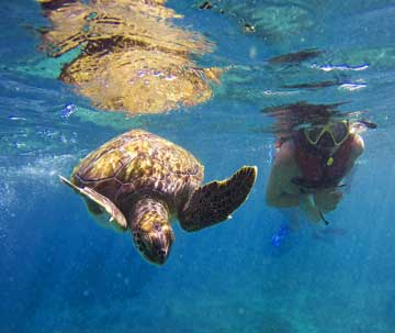 Swim with Sea Turtles Mexico