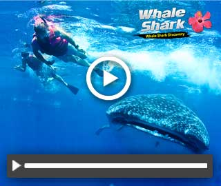 Cancun Adventures Whale Shark Tour