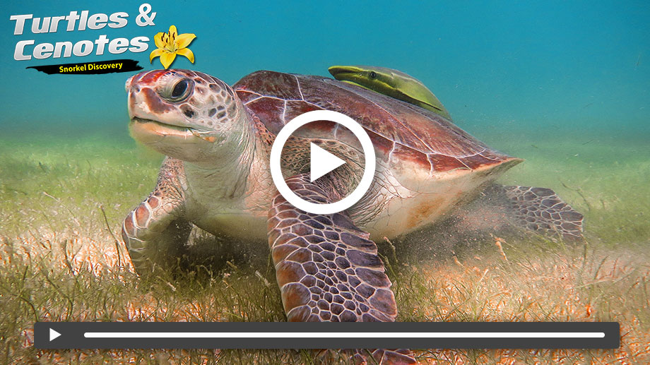 Swim with Turtles in Mexico on Vimeo