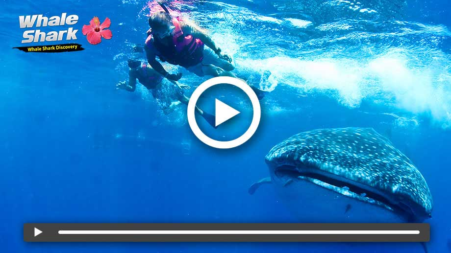 Whale Shark Tour on Vimeo